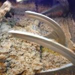 Pasta di olive - Frantoio Secondo - Dalle olive all'olio, la lavorazione in frantoio