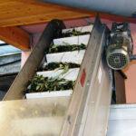 Frantoio Secondo - Dalle olive all'olio, la lavorazione in frantoio
